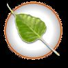 Bodhi_linux_logo